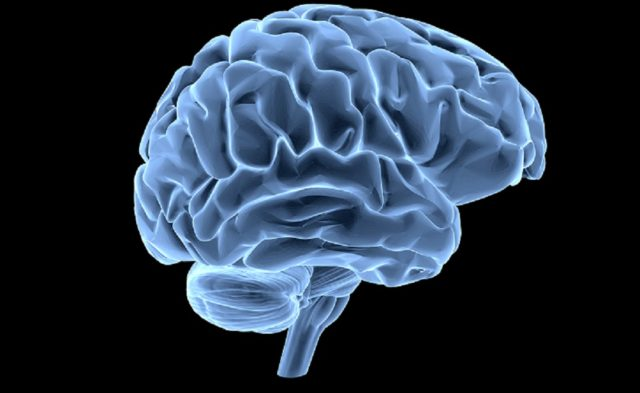 brain on black background