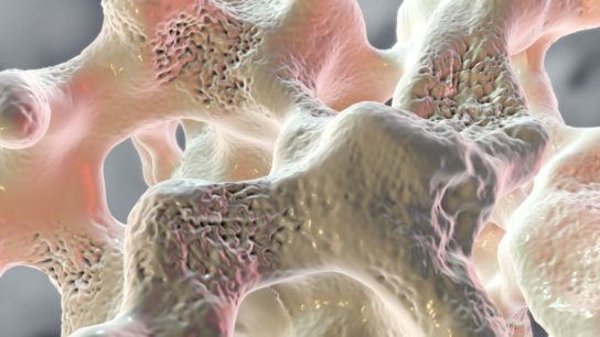 Spongy tissue in osteoporosis