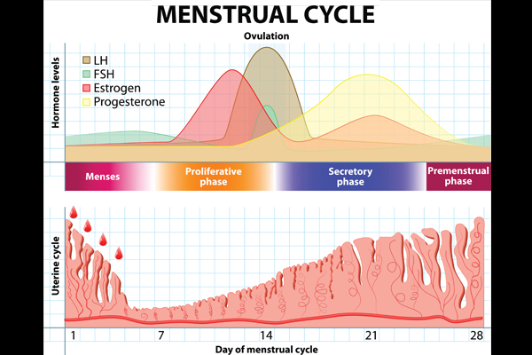 Hormonal status in women can significantly impact risk of developing RA. Women who start menstruating at an earlier age, have irregular periods because of excess hormone production, or breastfeed have been shown to be at higher risk of developing RA.[2,5] In breastfeeding mothers, the risk of developing RA increases fivefold after a first pregnancy, twofold after a second pregnancy, and then poses no increased risk in subsequent pregnancies.[2,6] Hormonal status can also impact RA symptoms. Disease remission is common in pregnancy, whereas exacerbation of symptoms often occurs in the postpartum period, particularly among women who breastfeed.[2,7] Numerous studies have shown that use of oral contraceptive pills might be protective against or delay the onset of RA, whereas use of hormone replacement therapy has not been shown to impact risk in either direction.[2]