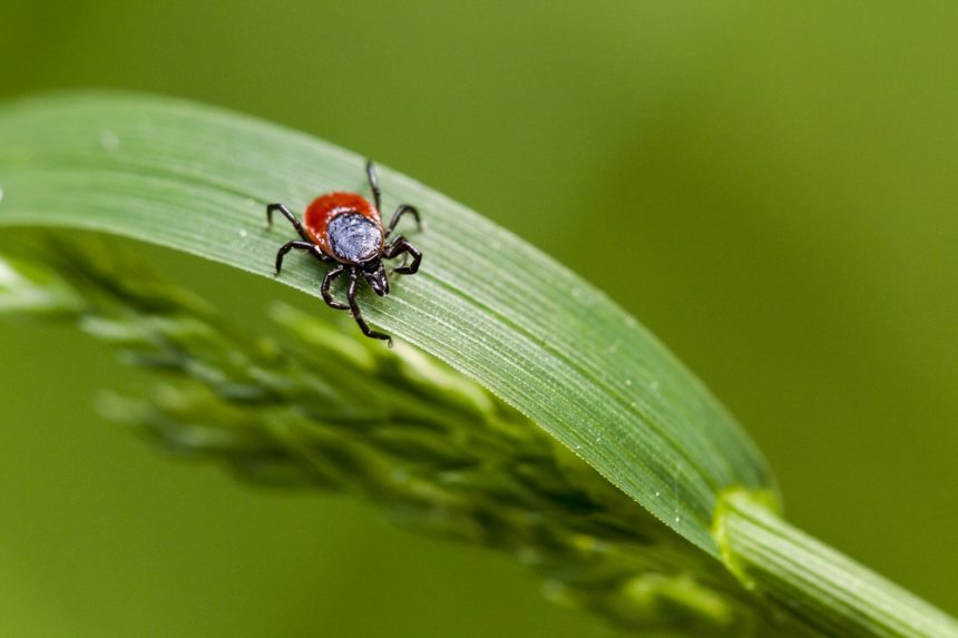 6 Myths about Lyme disease you may encounter with patients